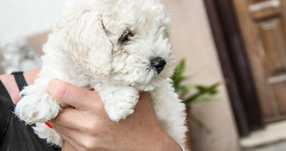 кучешка прическа